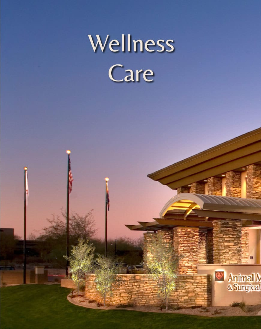 Veterinarian In Scottsdale - Wellness Care