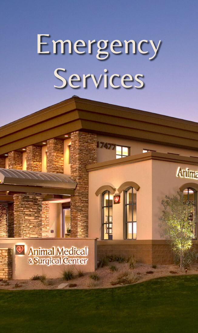 Vet In Scottsdale - 24 Hour Emergency Care